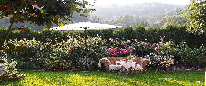 10 najpiękniejszych róż w moim ogrodzie